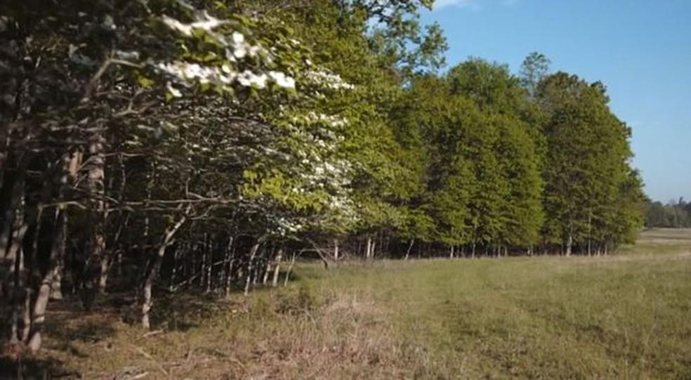 Esta foto é típica de uma floresta na qual, na ausência de um predador, os cervos se multiplicaram de forma descontrolada  — Foto: Passion Pictures/BBC