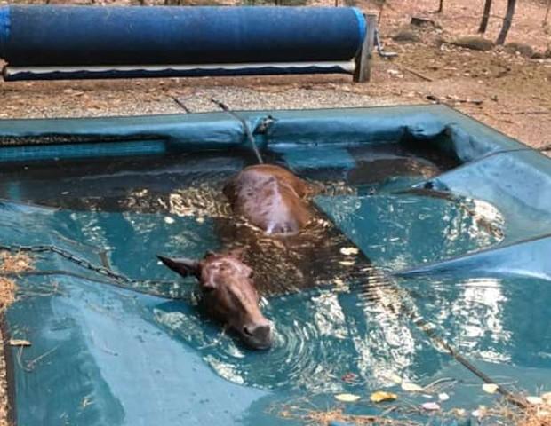 Cavalo fica preso em piscina e sobrevive aos incêndios da Califórnia (Foto: Facebook / Jeff Hill)