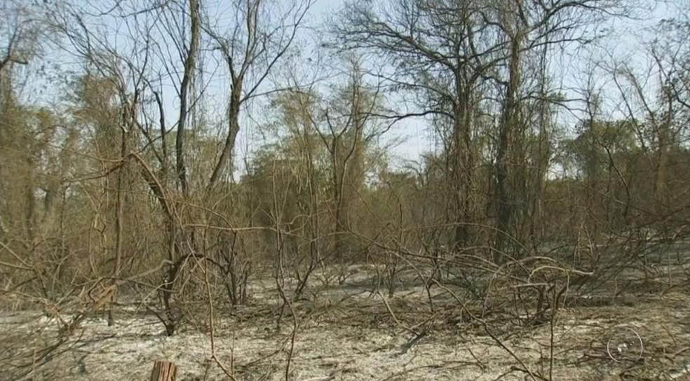 Fogo também atingiu área de preservação ambiental (Foto: Reprodução/TV TEM)