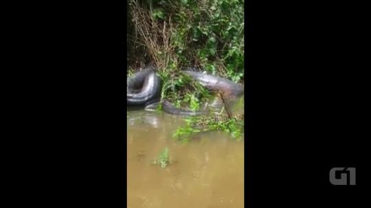 Grupo filma cobra gigante tomando sol às margens de rio no interior do Acre: 'Nunca tinha visto'