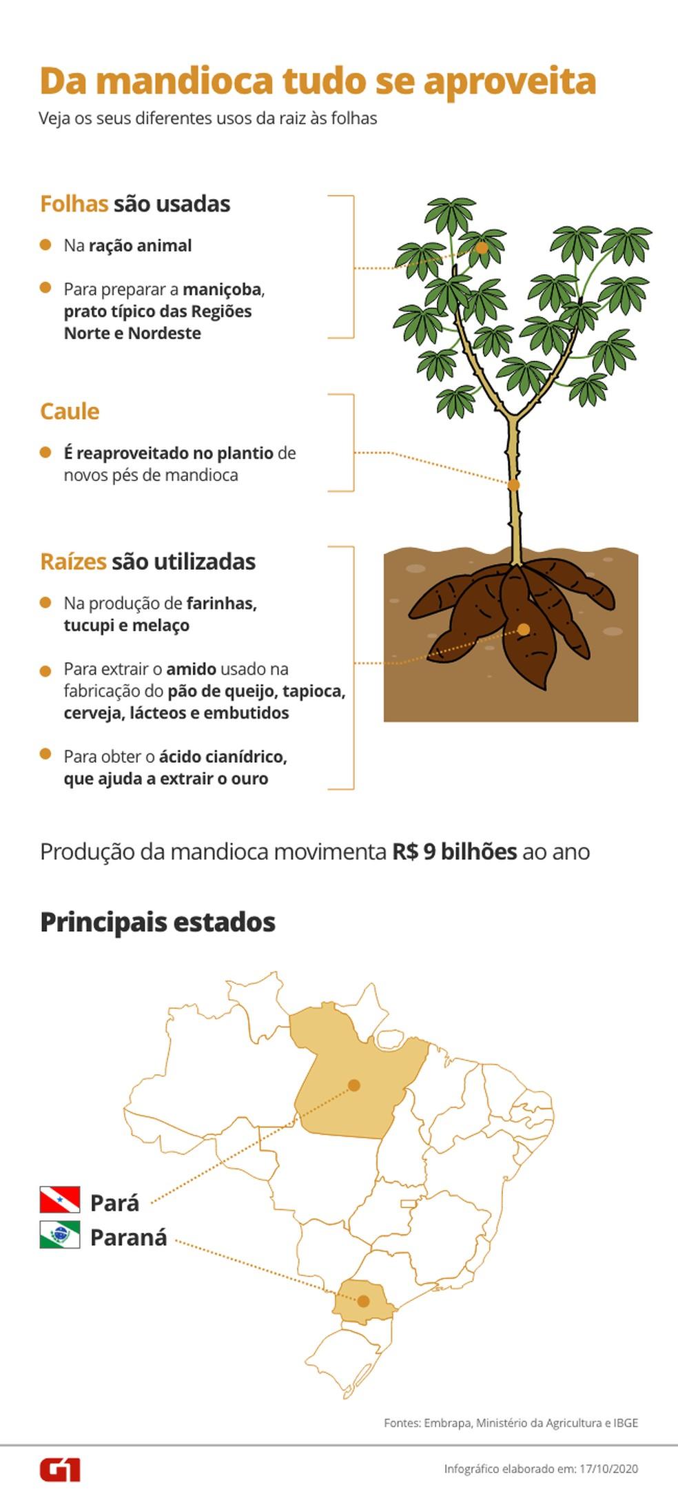 Utilidade da mandioca vai da raiz às folhas — Foto: Arte/G1