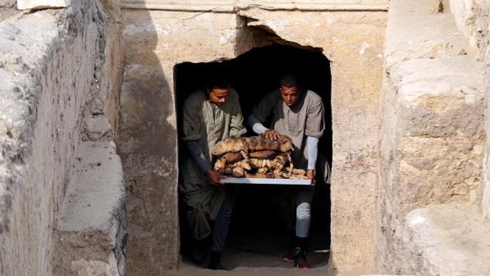 Equipes retiram gatos mumificados encontrados em tumbas no Egito — Foto: REUTERS/Mohamed Abd El Ghany