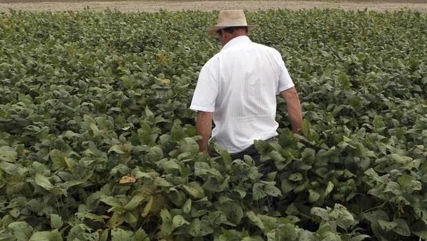 Homem em plantação de soja em Primavera do Leste, Mato Grosso (Foto: REUTERS/Paulo Whitaker)