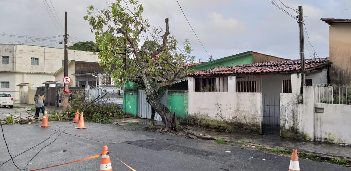 Árvore cai em cima de duas casas e trecho de rua fica interditado, em João Pessoa