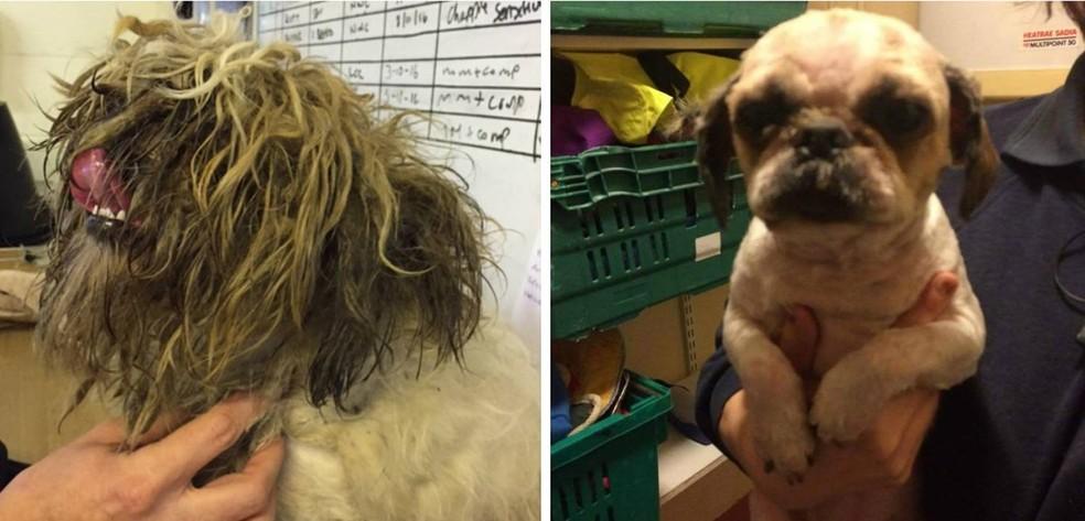 Cão ficou 'irreconhecível' após ter o pelo raspado na Inglaterra (Foto: Reprodução/Twitter/RSPCA)