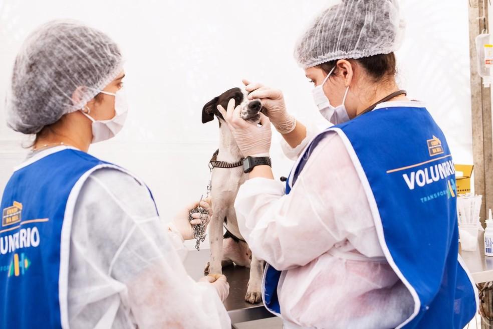Voluntárias em um dos atendimentos aos animais. — Foto: Sara Santiago