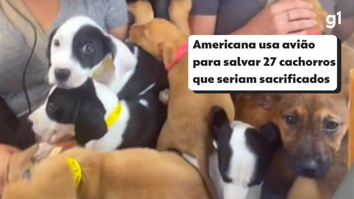 Americana usa avião para salvar 27 cachorros que seriam sacrificados; veja vídeo