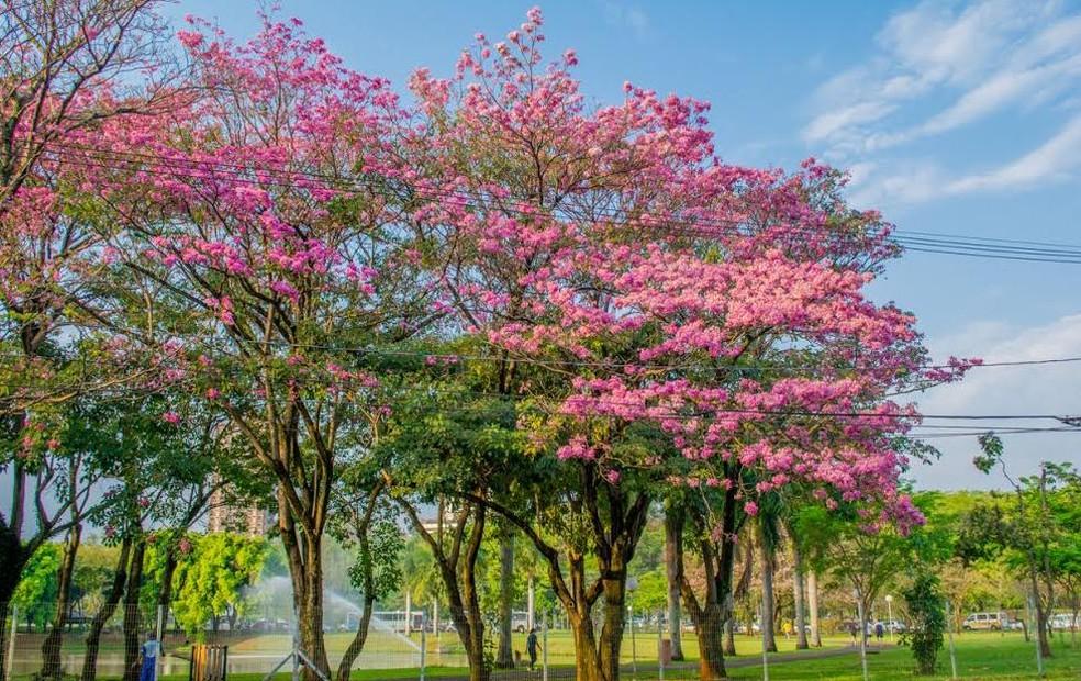 Arquivo: primavera em Piracicaba — Foto: Helder Prado