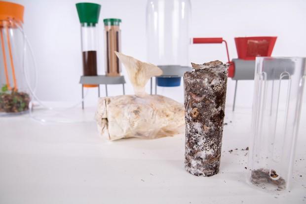 Designer desenvolve sistema para cultivar cogumelos em borra de café (Foto: Divulgação)