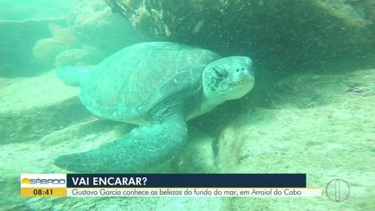 """""""Vai Encarar?"""" tenta reviver em mergulho a história do naufrágio Dona Paula, em Arraial do Cabo, RJ"""