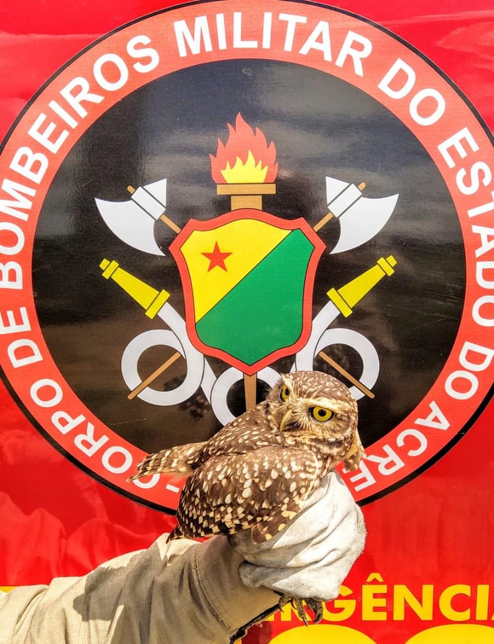 Animais fogem das queimadas e acabam aparecendo em áreas urbanas  — Foto: Asscom/Bombeiros Acre