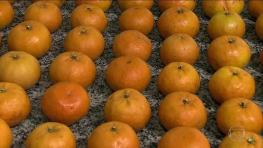 Primeira tangerina brasileira ganha registro do Ministério da Agricultura