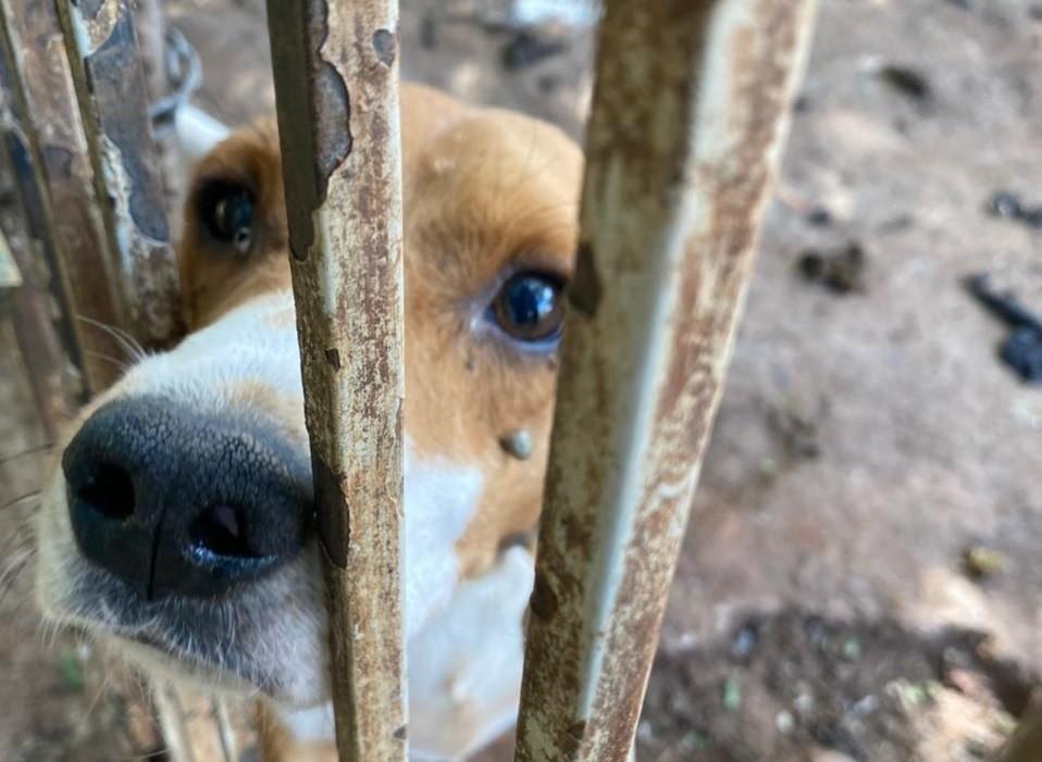 Aleac aprova PL que prevê que suspeito de maus-tratos a animais pague pelo tratamento veterinário no Acre