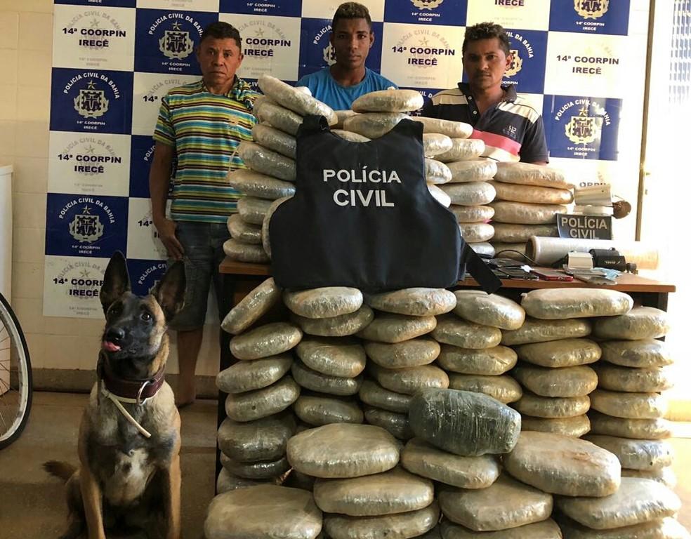 Ação da Polícia Civil conta com ajuda de cão, apreende 132 kg de maconha e prende 3 traficantes em Irecê. (Foto: Divulgação/SSP-BA)