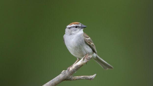 Uso intensivo de herbicidas e pesticidas se tornou um 'tempero' nada agradável aos pássaros na zona rural (Foto: M.K. Rubey via BBC)