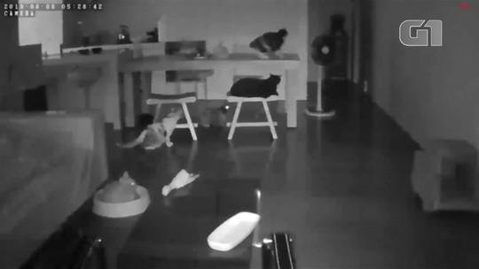 Terremoto assusta gatos em Taiwan