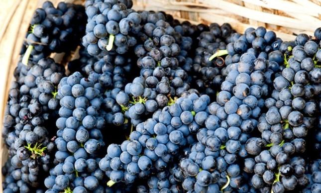 Degustação de rótulos da Guaspari: vinícola fica na Serra da Mantiqueira