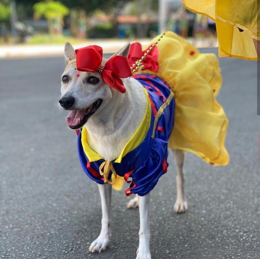 Cão vestido de Branca de Neve ficou na segunda colocação — Foto: Divulgação