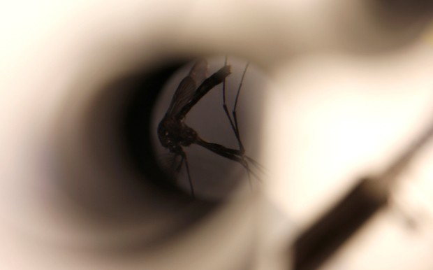 Estudo analisou surto de zika e casos de microcefalia na Polinésia Francesa (Foto: Lucy Nicholson/Reuters)