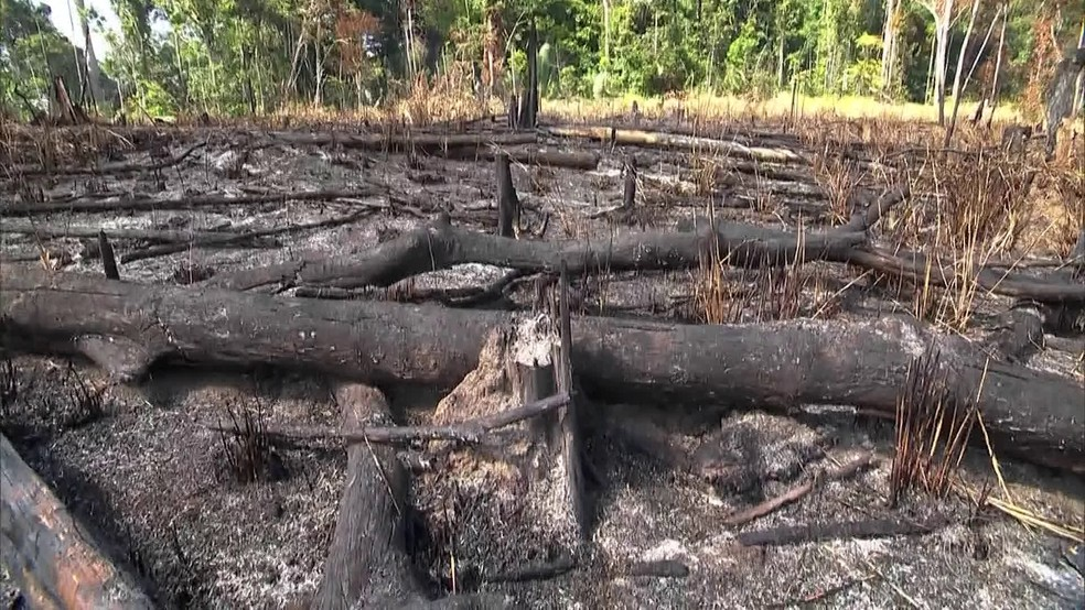 Área de desmatamento na Amazônia — Foto: JN
