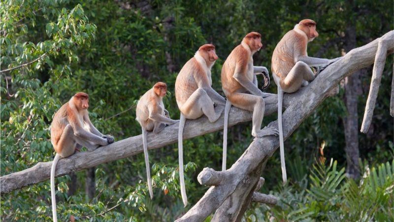 Por que e como o ser humano perdeu o rabo na evolução?