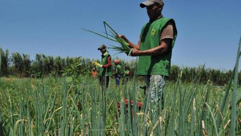 agricultura-familiar (Foto: Arquivo/Valter Campanato/Agência Brasil)