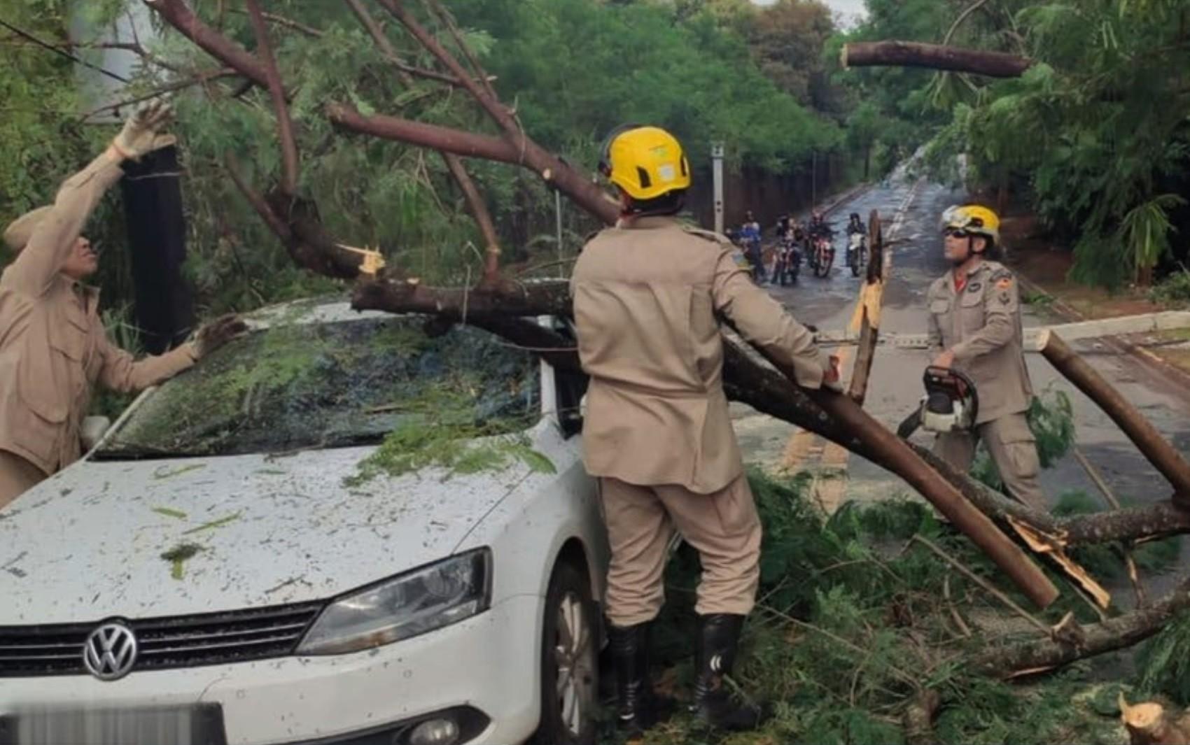 Chuva forte derruba árvores sobre carros, causa interdição de casas e alaga ruas e feira em Goiás