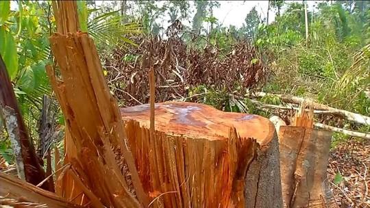 ONG vê proteção de milícia a rede criminosa no desmatamento