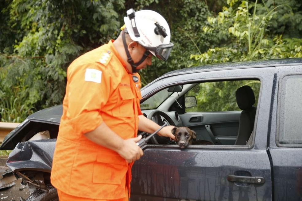 Bombeiro acalma cachorro que estava em carro envolvido em acidente no DF (Foto: CBMDF/Divulgação)