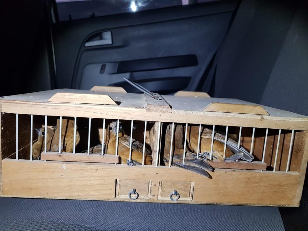 Aves resgatadas pela PRF estavam em gaiolas dentro de carro, no RN — Foto: PRF/Divulgação