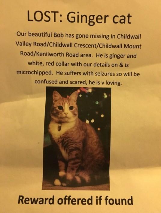 Cartaz de busca de Bob