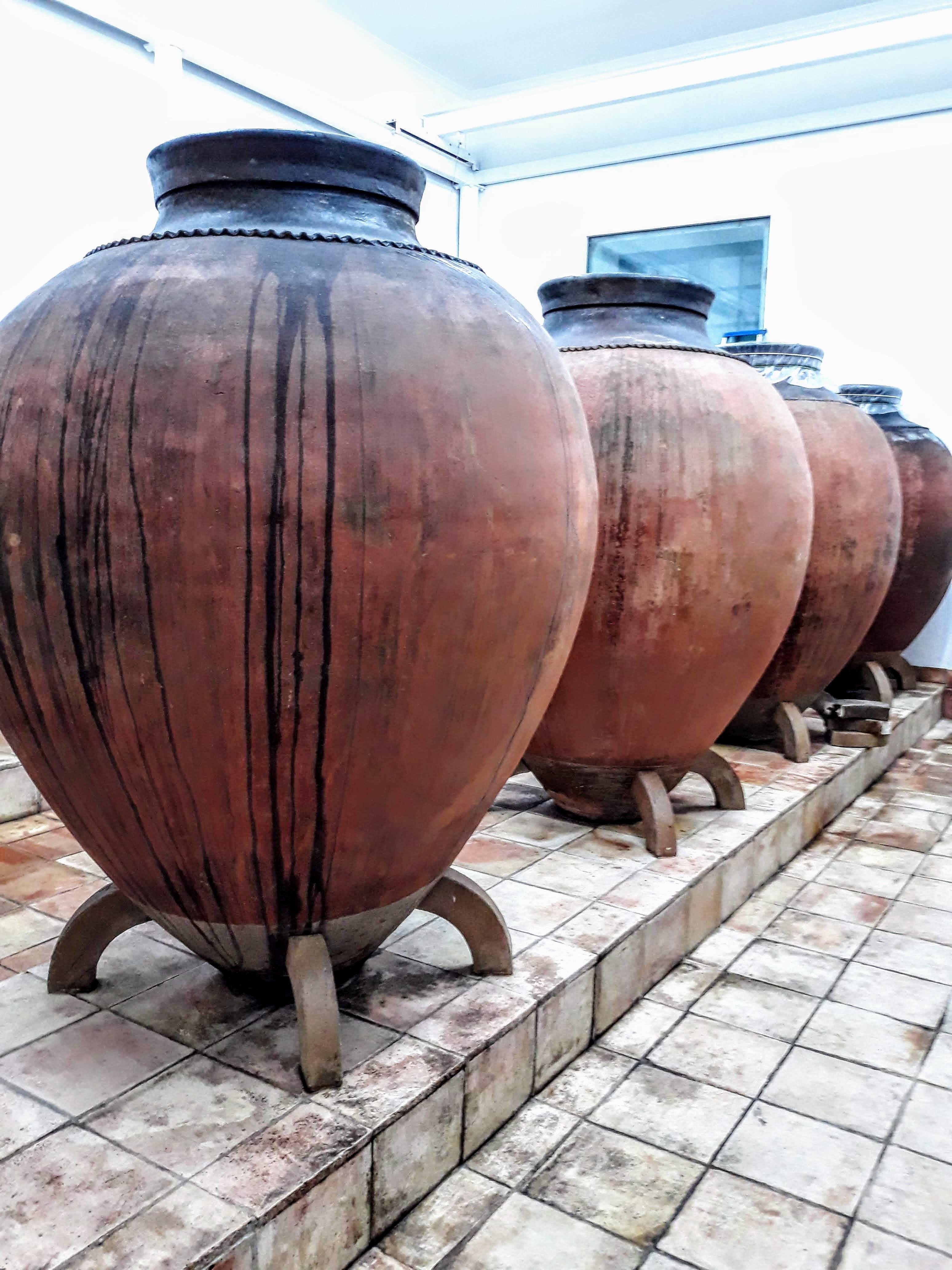 Vinhos serão apresentados no Brasil