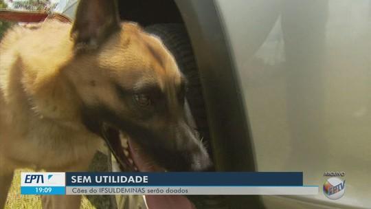 Campus Muzambinho do IF Sul de Minas abre edital para doação de cães de raça