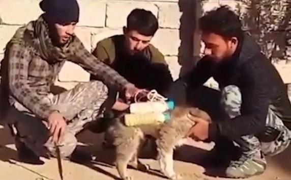 Milicianos desarmam bomba em cão