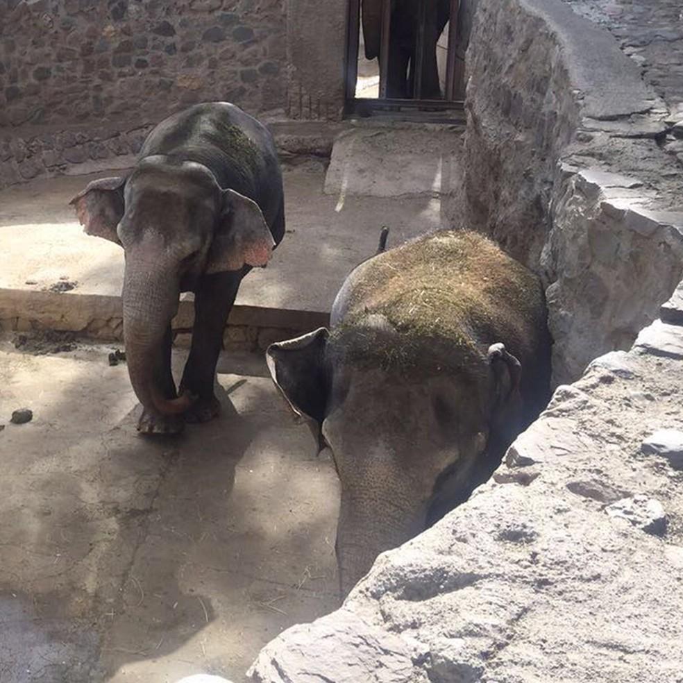 Pocha e Guilhermina estão em treinamento para transporte ao Santuário — Foto: Reprodução