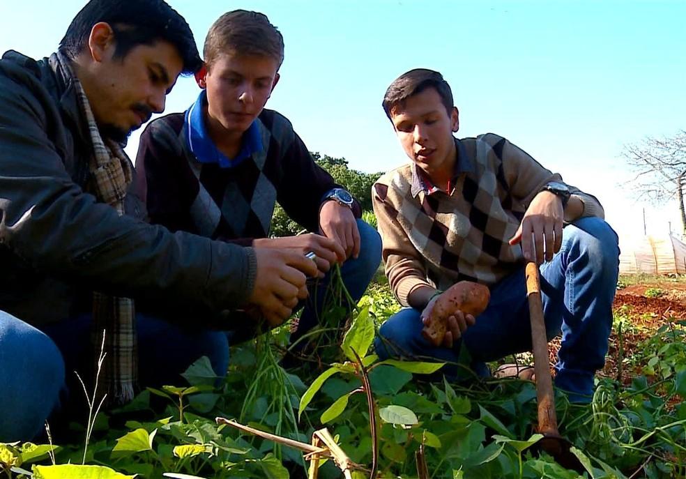 Projeto sobre a batata doce foi selecionado para o London International Youth Science Forum (Foto: Reprodução/RBS TV)