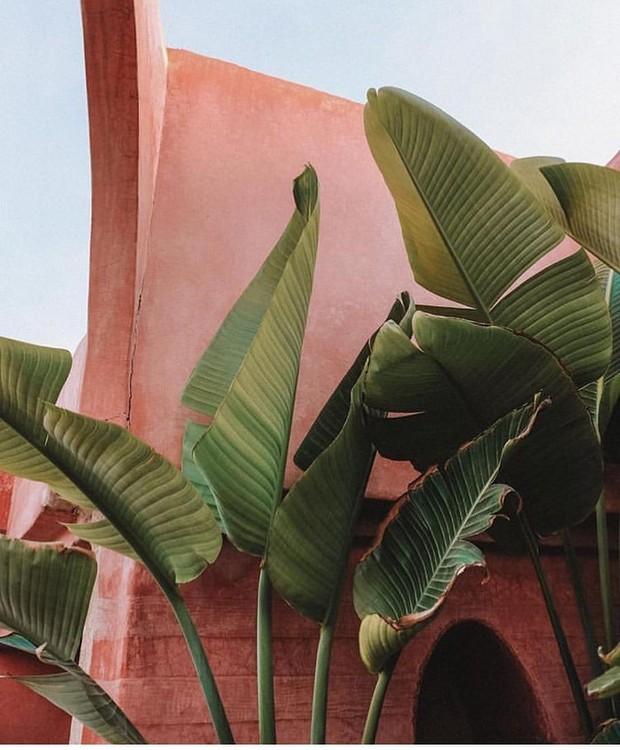 Vem do Marrocos a combinação de palmeira com fundo rosa apagadinho (Foto: Instagram/Reprodução)