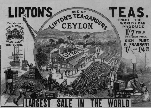 Lipton tinha muitas plantações no Sri Lanka, então conhecido como Ceilão (Foto: Getty Images via BBC News)