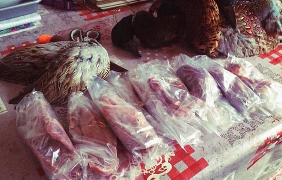 Carne obtida por Lisa em caçada
