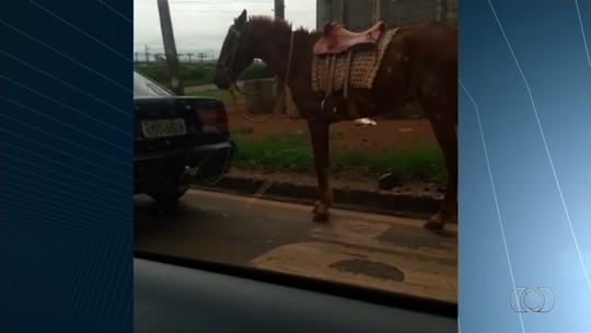Vídeo mostra motorista puxando cavalo amarrado a engate de carro em Anápolis