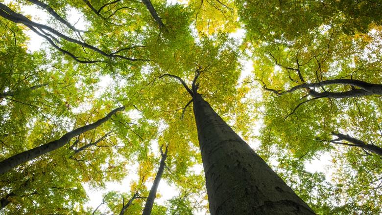 arvore-floresta-verde-planta (Foto: Thinkstock)