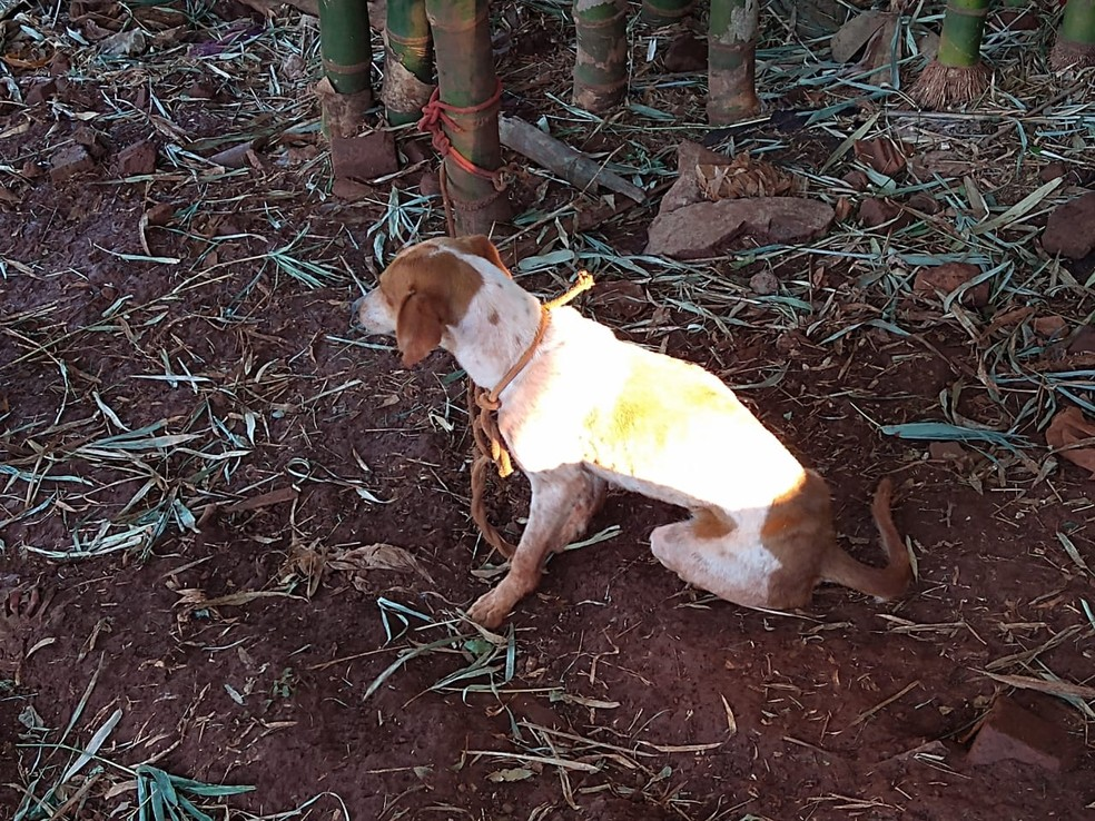 Polícia resgata cães em situação de maus-tratos e multa dono em Itatinga — Foto: Polícia Civil/Divulgação