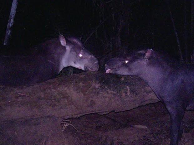 A nova espécie foi reconhecida oficialmente em 2013, mas estudos eram realizados há mais de 10 anos. (Fot Suzi Rocha/G1)