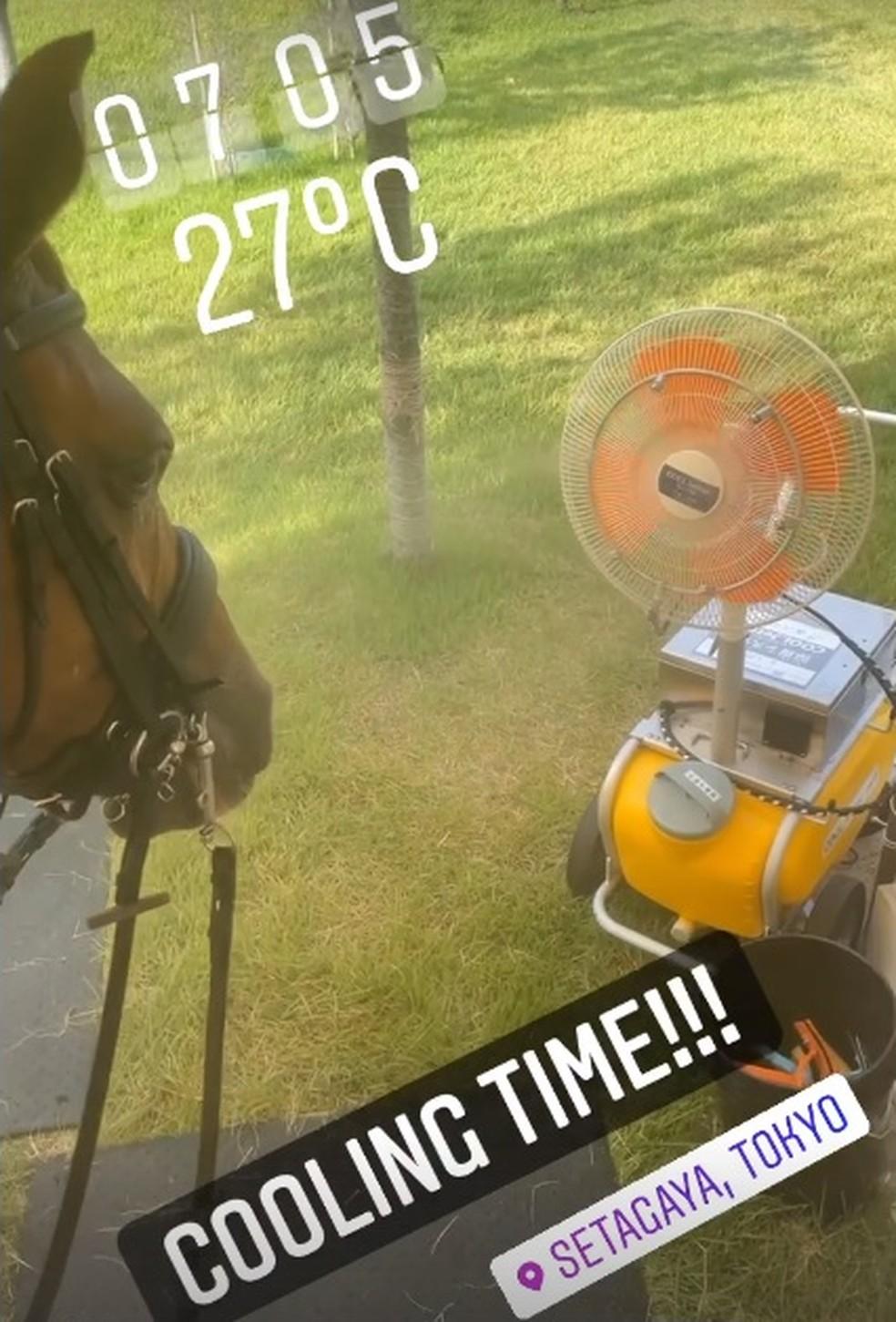 cavalo de Carlos Parro — Foto: Reprodução instagram Carlos Parro