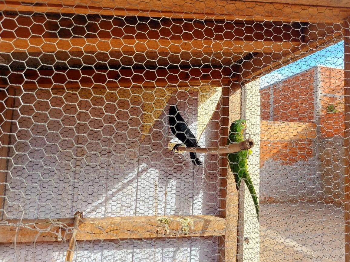 Morador de Pirapozinho recebe multa de R$ 2 mil por manter aves em cativeiro