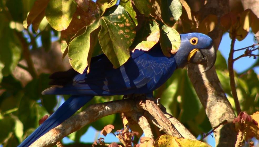 a35f58c68 ... Vida selvagem se revela para as lentes do TG no Pantanal — Foto:  Ricardo Custódio
