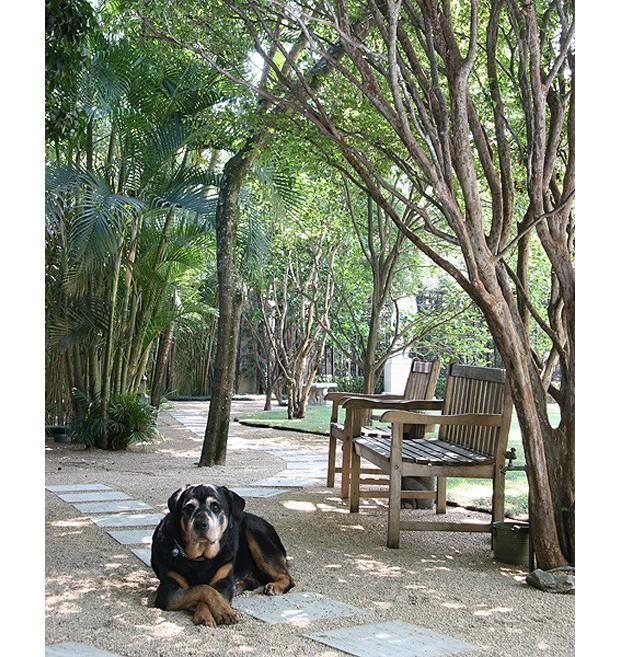 A raça do cachorro determina o tamanho do jardim. Para os de pequeno porte, uma área livre de 10 m² a 15 m² é suficiente. Para os de grande porte, é preciso que o jardim tenha mais de 20 m². (Foto: Casa e Jardim/Arquivo)