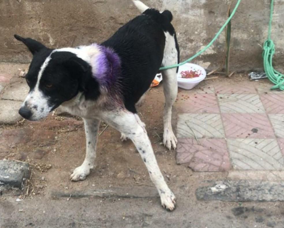 Cachorro se encontra na Ong Vira-Lata de Raça. — Foto: Reprodução/TV Verdes Mares
