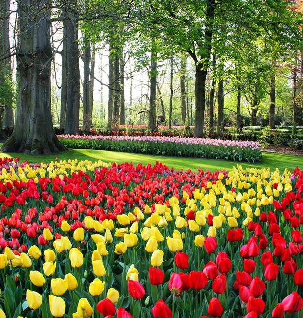7-lugares-coloridos-tulipas-keukenhof-jardim-de-flores-holanda (Foto: Thinkstock)