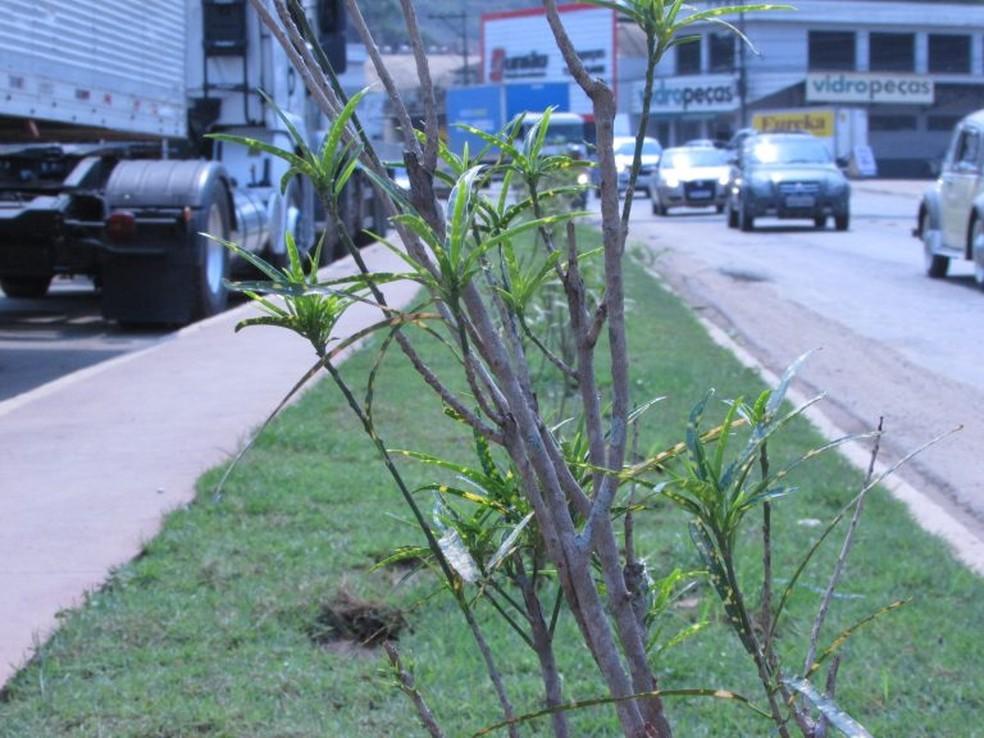 Novas plantas foram colocadas no trecho — Foto: Prefeitura de Muriaé/Divulgação